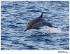 Dolphin_Common TAB11MK4-02502