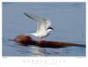 Tern_Common TAB08MK3-10971