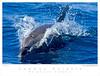 Dolphin_Common TAB08MK3-03163