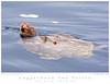 Sea Turtle_Loggerhead TAB09MK3-15321