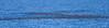 Storm-Petrel Raft