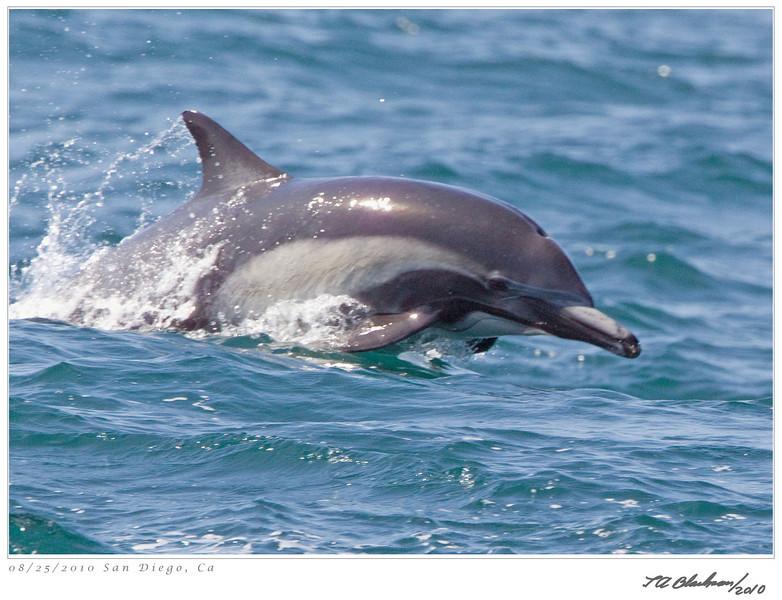 Dolphin_Common TAB10MK4-27929