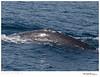 Whale_Gray TAB10MK4-5514