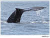 Whale_California Gray TAB11MK4-02793