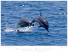 Dolphin_Common TAB09MK3-12794
