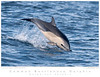 Dolphin_Common TAB10MK3-01084