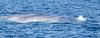 Whale_Blue TAB10MK4-27097