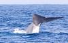 Whale_Blue TAB10MK4-27132