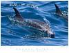 Dolphin_Common TAB09MK3-13019
