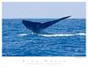 Whale_Blue TAB08MK3-11303