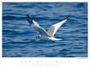 Gull_Sabine's TAB08MK3-11667