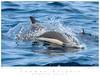 Dolphin_Common TAB10MK3-01181