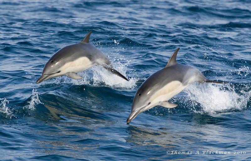 Dolphin_Common TAB10MK4-27013