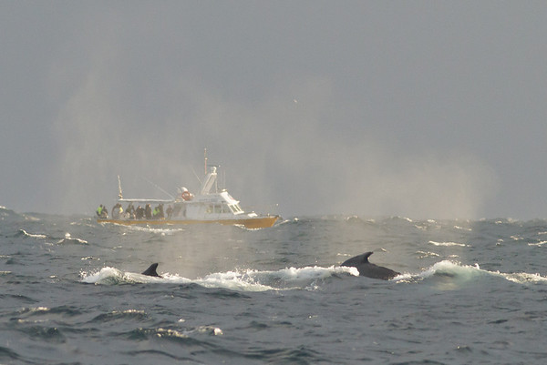 Humpback Whale Southport, QLD June 29, 2013 IMG_9236