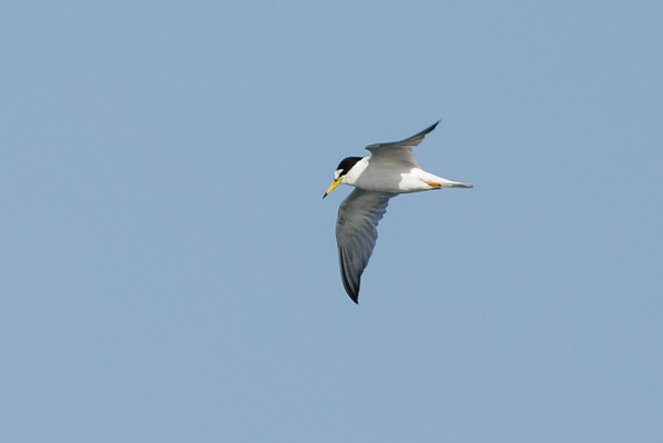 Southport, QLD October 11, 2014 IMG_2623