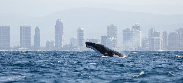 Southport, QLD October 11, 2014 IMG_2574