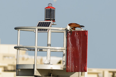 Southport, QLD October 11, 2014 IMG_2698