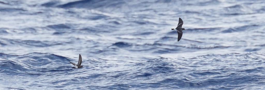 April 09, 2016 8:34:07 AM Britannia Seamount, QLD _MG_4145