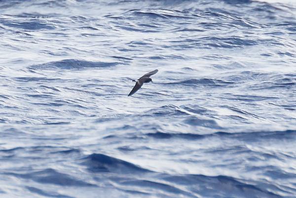 April 09, 2016 8:34:08 AM Britannia Seamount, QLD _MG_4147