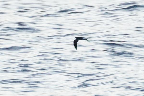 April 09, 2016 5:33:57 PM Britannia Seamount, QLD _MG_5895