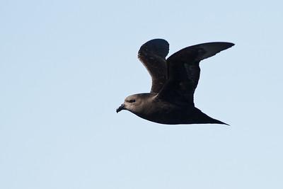 Eaglehawk Neck, TAS August 31, 2013 IMG_9517