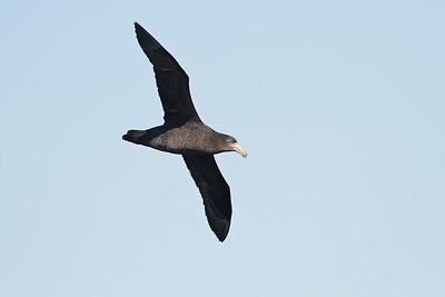 Eaglehawk Neck, TAS August 31, 2013 IMG_9713
