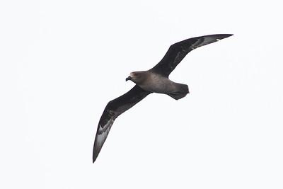 Eaglehawk Neck, TAS September 01, 2013 IMG_9938