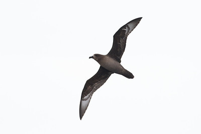 Eaglehawk Neck, TAS September 01, 2013 IMG_0409