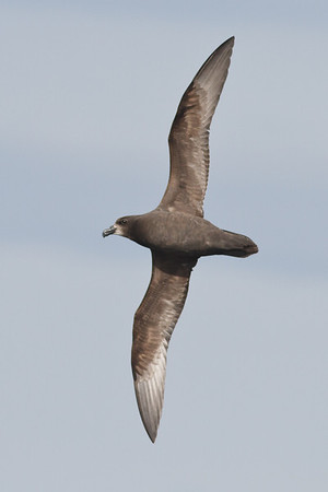 Eaglehawk Neck, TAS September 01, 2013 IMG_0899