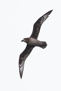 Eaglehawk Neck, TAS September 01, 2013 IMG_9939