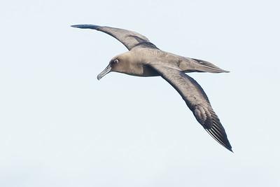 May 28, 2016 Eaglehawk Neck, TAS IMG_3423