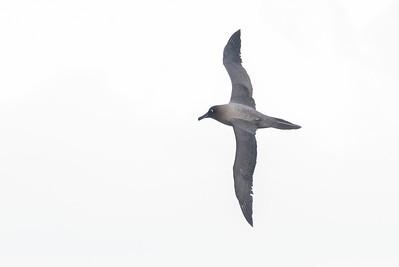 May 29, 2016 Eaglehawk Neck, TAS IMG_7189