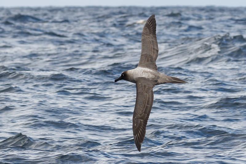 May 29, 2016 Eaglehawk Neck, TAS IMG_7733