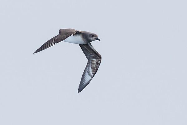 May 29, 2016 Eaglehawk Neck, TAS IMG_7180