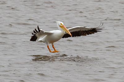 Pelican Landing at Lock 14