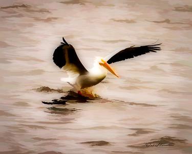 Pelican Rendition
