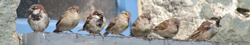 Sparrow Line