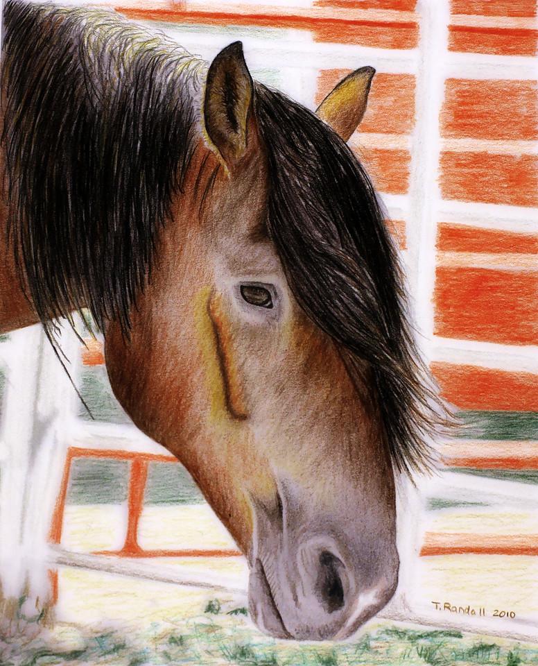saddle bronc pf