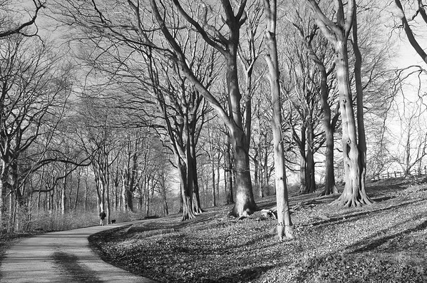 Grove Lane, Padiham
