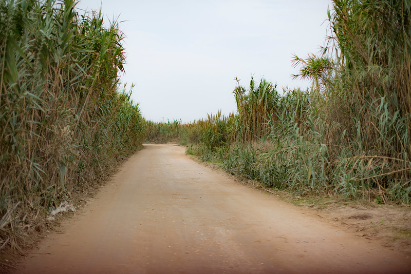 Cool dirt road in Baleal, Portugal.