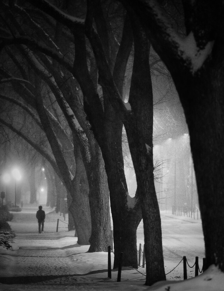 A lone pedestrian traverses under the elm canopy along Burrowes Road in the early hours of Friday, Jan. 21, during a snow storm that brought approximately four inches of snow to University Park overnight.