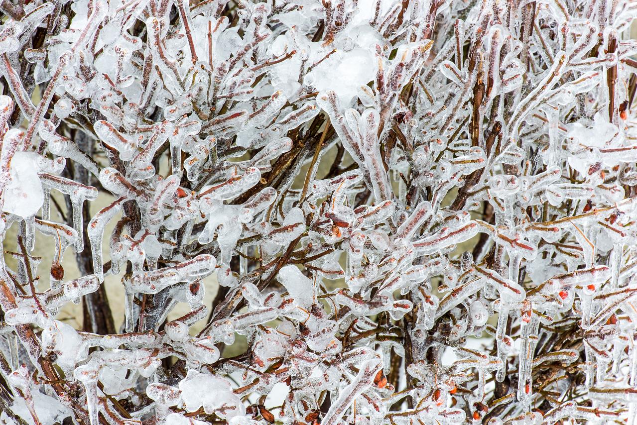 Frozen Rain on bushes - 05 February 2014