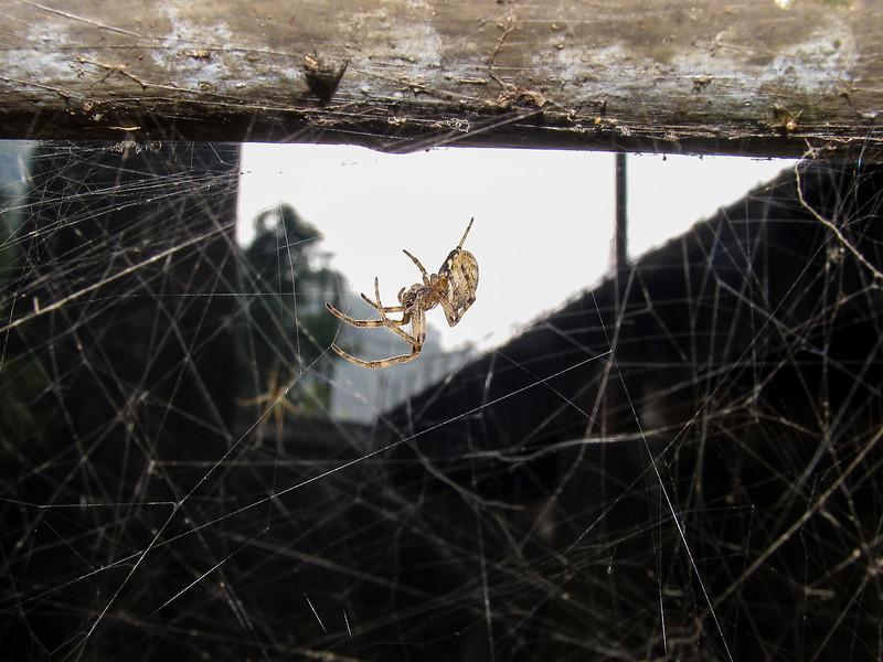Spider near Conowingo Dam - September 2005