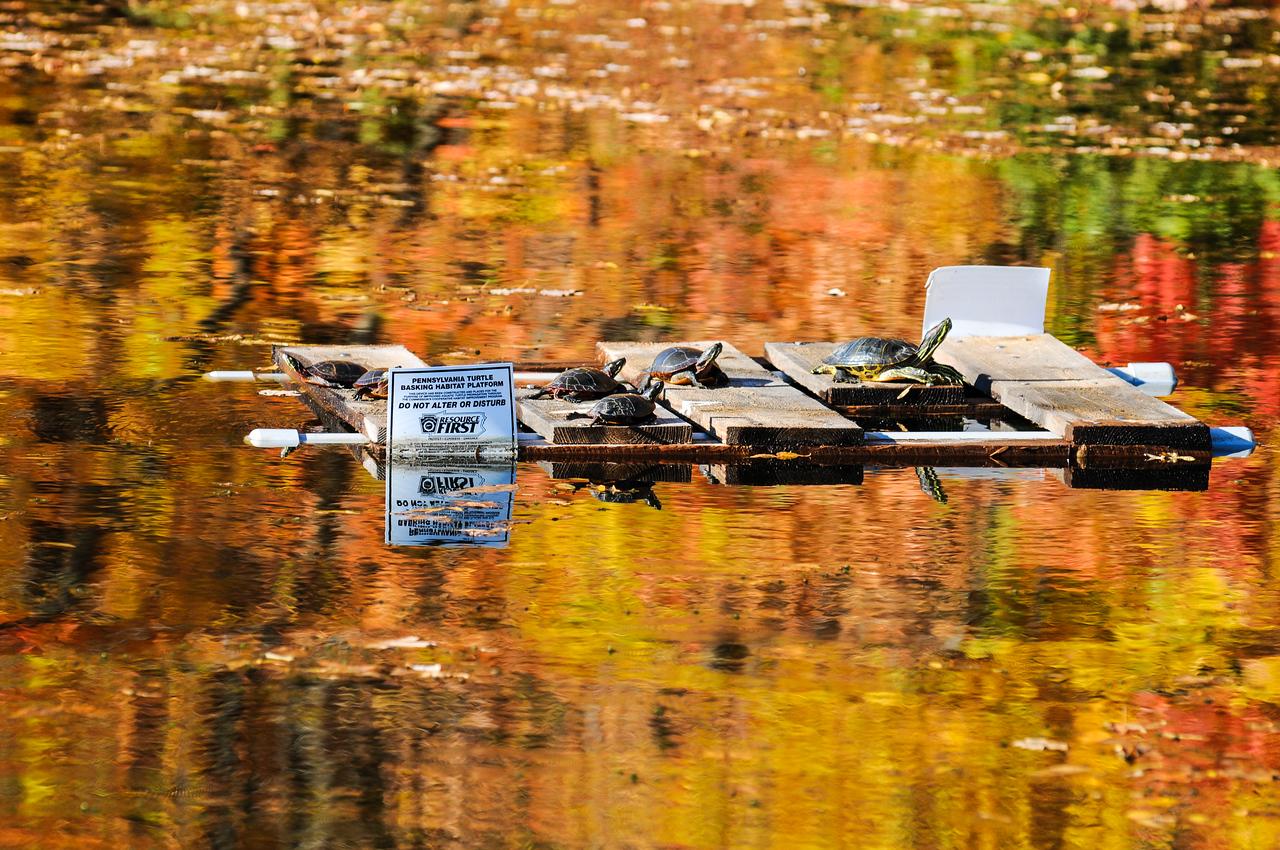 Lake Nockamixon - October 2008