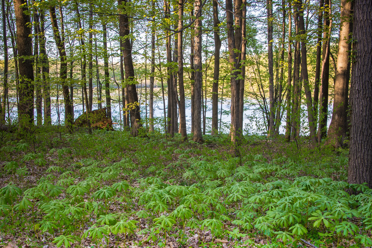 Late day light over Lake Towhee - May 2013