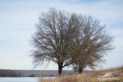 Prince Gallitzin trees