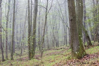 Pennsylvania spring