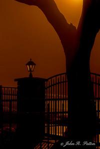 Night gate and tree