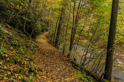 Trough Creek SP 3