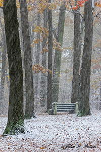 Bench and trees in first snow